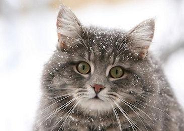 Кошки-няньки – стоит ли доверять?